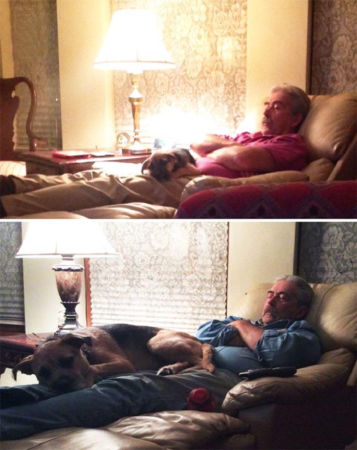 Fotos antes e depois de cães fofinhos