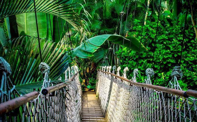 ponte simples na floresta