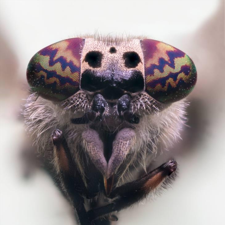 fotos de insetos