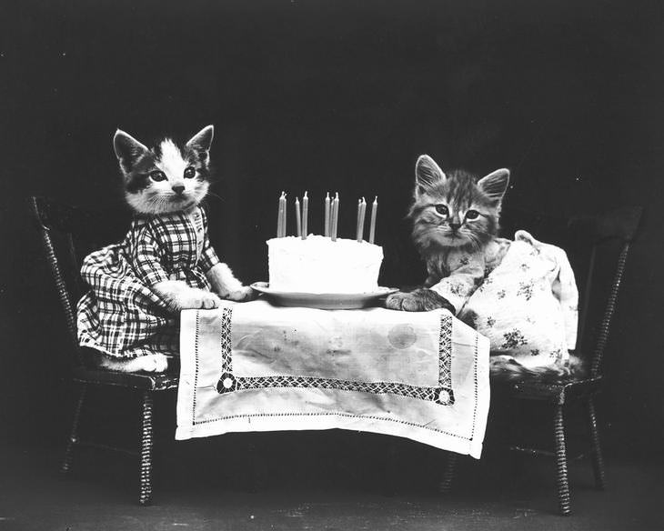 cães e gatos com roupinhas