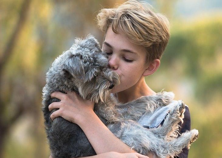 linguagem do amor animal