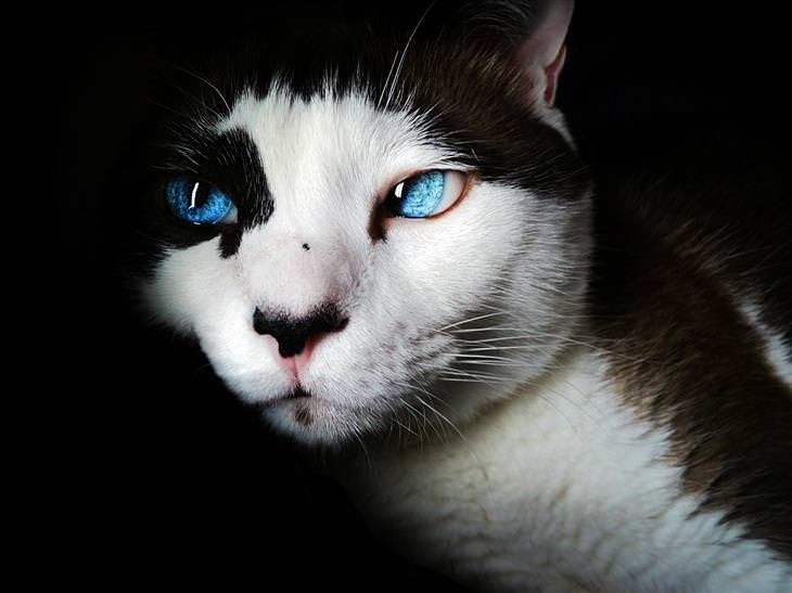 fatos sobre gatos