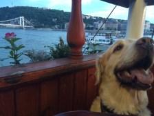 No restaurante barco, Budapeste