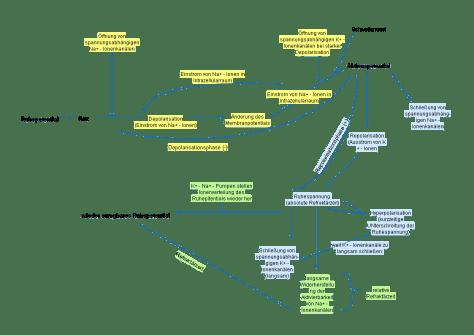Aktionspotential_Verlauf_Graphik