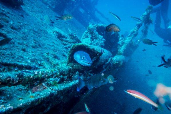 Conger eel - Adriatic Sea