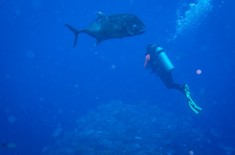 Giant Trevally and Jeff - Tubbataha Reef Philippines