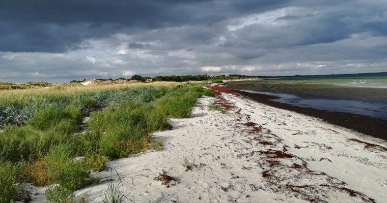 Falsterbo – tam gdzie ptaki opuszczają Skandynawię