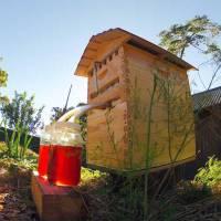 Una nueva colmena extrae automáticamente la miel sin molestar a las abejas