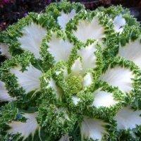 Algunas de las flores más bellas