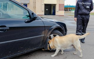 patrol dog and officer inspecting abandoned vehicle