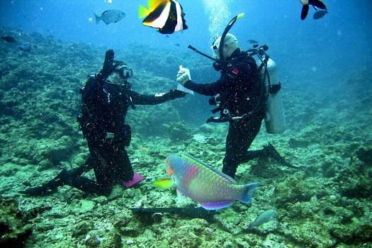 Buceo en aguas mexicanas