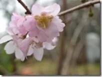 理学療法士になる 桜進路