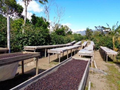 Panama Coffee Farm 14