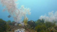 Unterwasser Observatorium