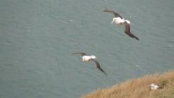 Albatrosse I