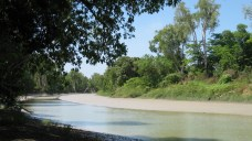 Krokodil Fluss