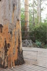 Baumleiter
