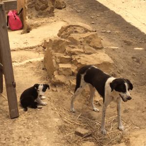 beth dogs