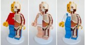 See the Inner Anatomy of Barbie, Mario and Mickey Mouse—Bones, Guts and All