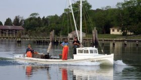 Checking in on the Health and Vigor of the Chesapeake Bay image