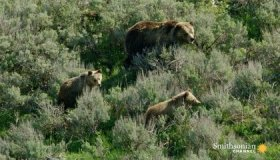 Why Yellowstone Can be a Magnet for Deadly Misadventures image
