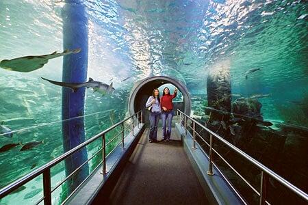 Quelques aquariums insolite et bizarre 3 photos soyez for Aquarium insolite