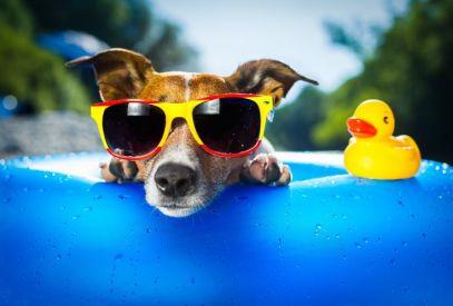 Dog-Sunglasses-Summer1