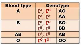 Blood Genotype