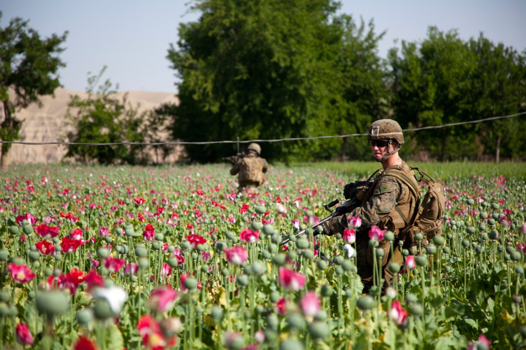 opium fields 13 1024x682 U.S. Troops Patrolling Poppy Fields In Afghanistan (Photos)
