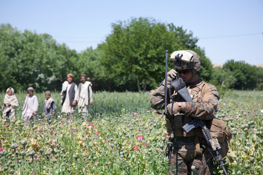 opium fields 8 1024x682 U.S. Troops Patrolling Poppy Fields In Afghanistan (Photos)
