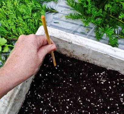 Jeg bruker en pinne til å stikke dype hull på forhånd som jeg planter stiklingene i.