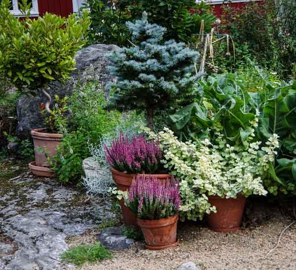Jeg har fjernet prydtobakkplantene23_