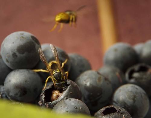 Insektene er travle24_