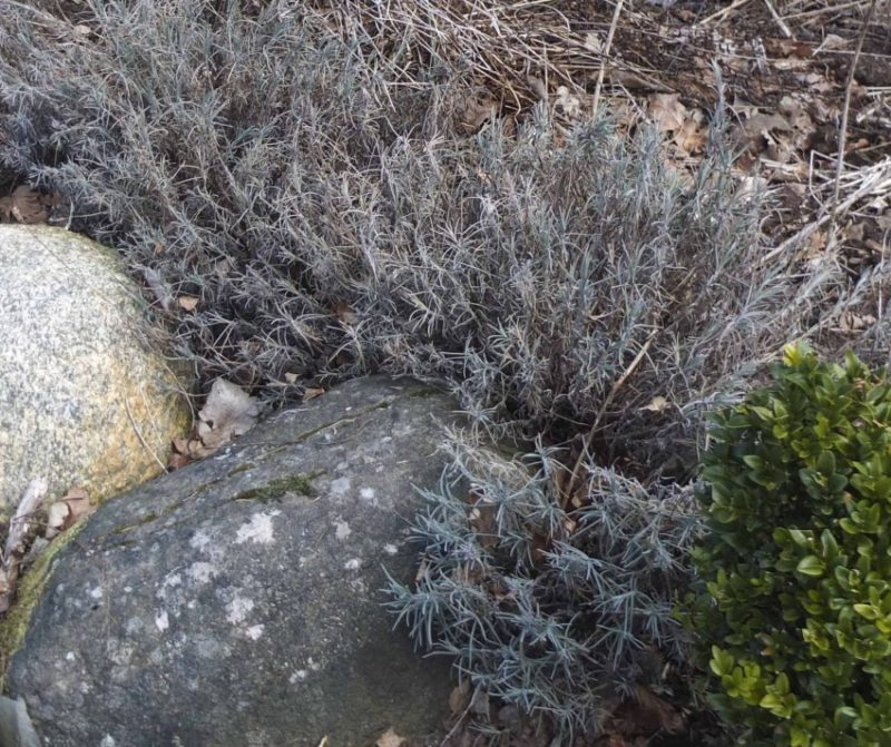 Frost i hagen27_