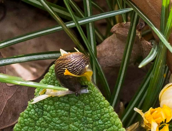 war on snails20_