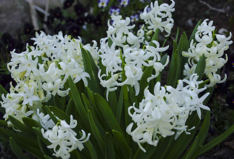 April i hagen 22_