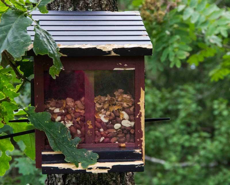 woodpecker_