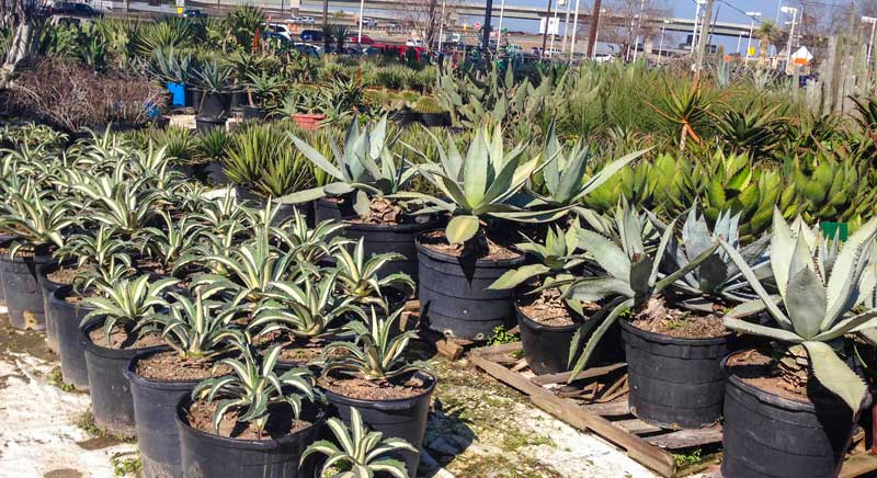 search succulents_5