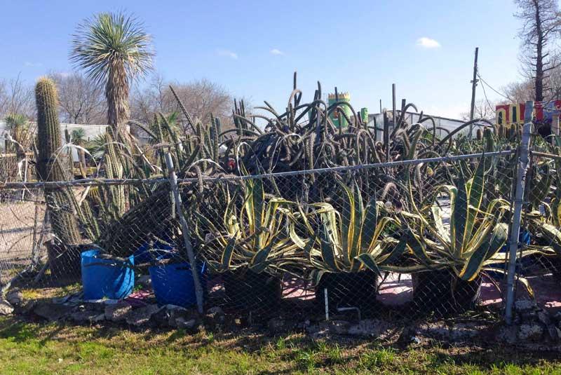 search succulents2_