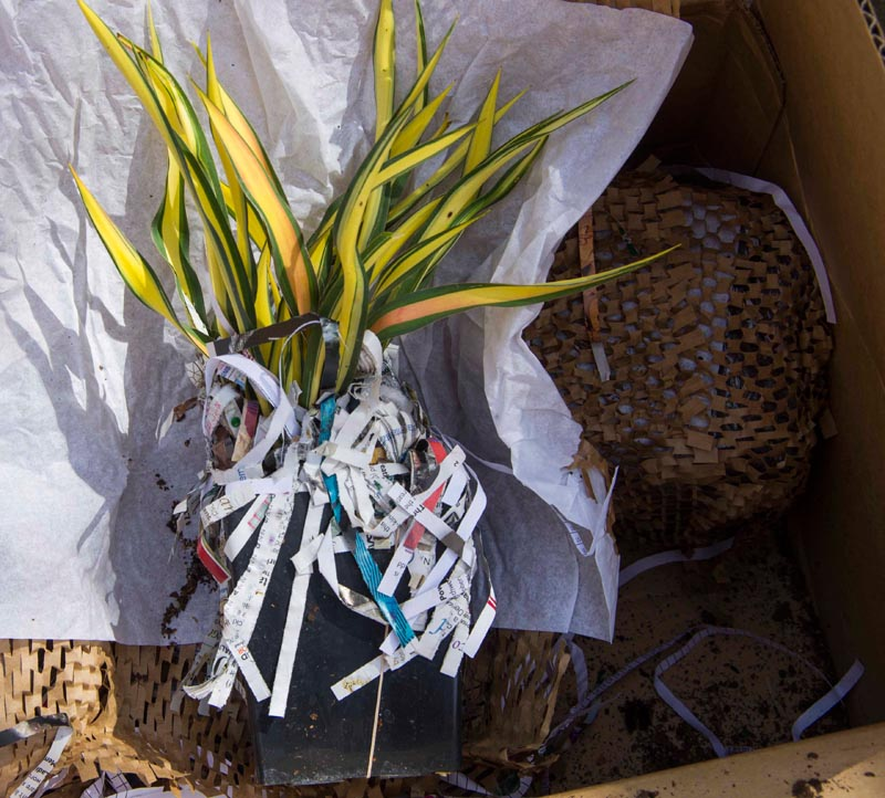 buy plants internet2_