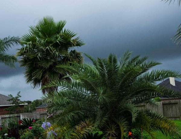 Rainfall TX_