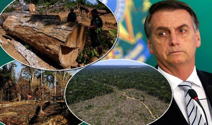 Enquanto Bolsonaro perdoa ruralistas, desmatamento na Amazônia cresce 100%
