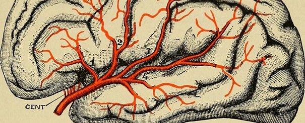 Mamy coraz więcej dowodów na to, że choroba Parkinsona zaczyna się w jelitach - nie w mózgu