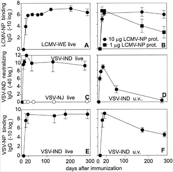 Wirus odry i neutralizacja - redukcja łysinek