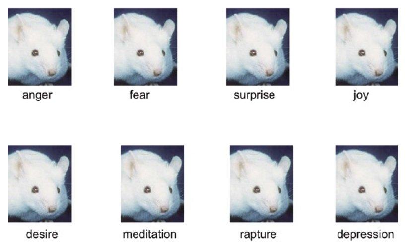 Poręczny przewodnik do rozszyfrowywania psychologii myszy.