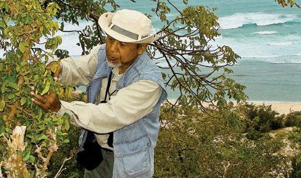FIELDWORK Soejarto clips a branch to prepare a specimen at Nui Chua National Park in Vietnam.