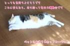 ホットカーペット猫
