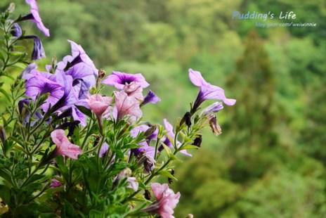 【遊記-苗栗】南庄景觀餐廳《山行玫瑰》山林間的咖啡/簡餐/民宿