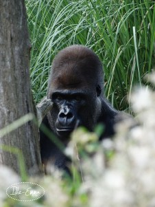 Photo - London Zoo I