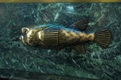 Bronze Bubblefish